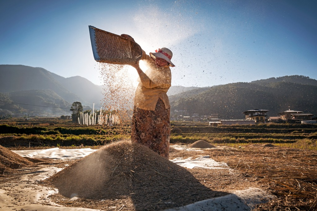 A woman manually separates rice from the husk in a field outside Punakha, Bhutan on December 11, 2017.  Bhutan is a nation at a crossroads, aiming to preserve its deep cultural heritage while still cautiously opening itself up to modernity.  Still, farming plays a critical role in the nation's economy with at least 80% of all Bhutanese being involved in the agricultural sector.  The photographer did not influence the scene or circumstances of this photograph.  The woman was performing this task in the field; the photographer did not influence the scene or circumstances of this photograph.