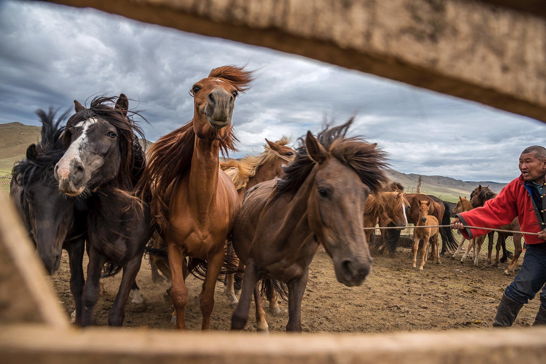 SCOTT A WOODWARD_SWA5789 (Mongolia)